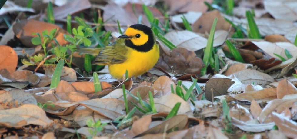 Our Quest for 500 birds in 2015